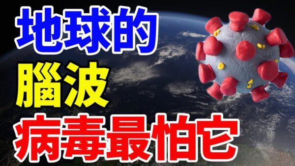 【信不信由你】地球的脑波 病毒最怕它