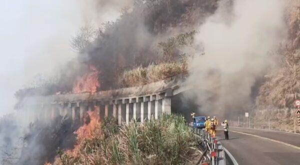 久旱干燥 阿里山森林大火延烧20小时难扑灭(视频)