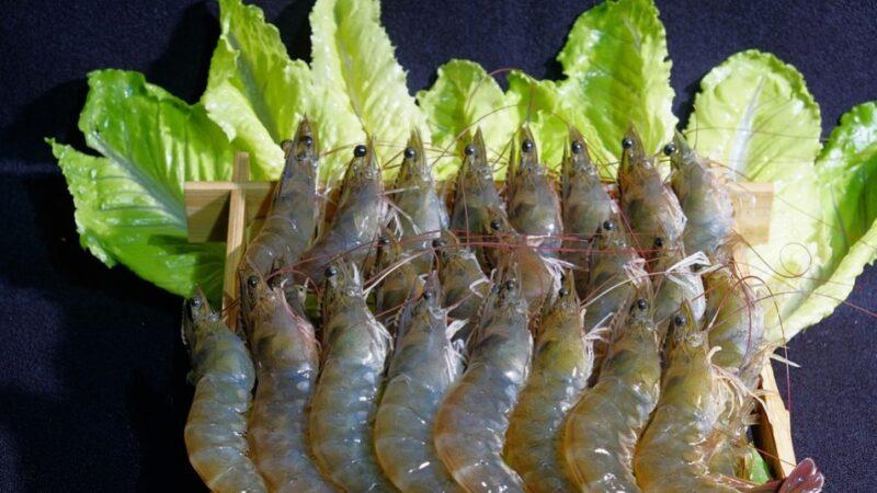 蝦頭的重金屬超標?吃蝦前必看的6個真相