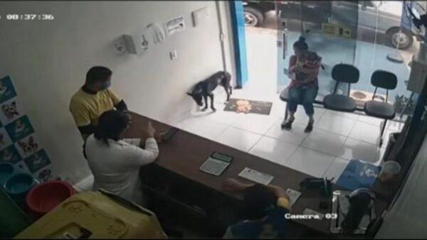 小狗自行走進獸醫院 舉起受傷前腳求救!(視頻)