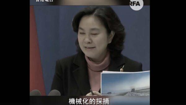華春瑩拿黑奴照洗地新疆 瘋狂眨眼模式再現(視頻)