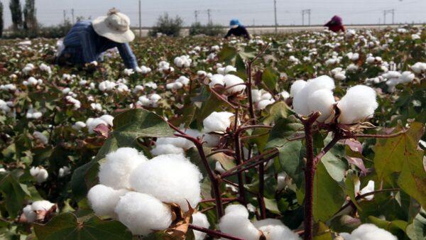 新疆棉花「不吃這一套」 黨媒借楊潔篪言論煽情