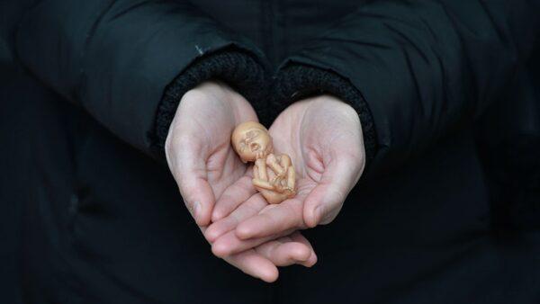 【名家专栏】禁止人类胎儿养殖 防患于未然