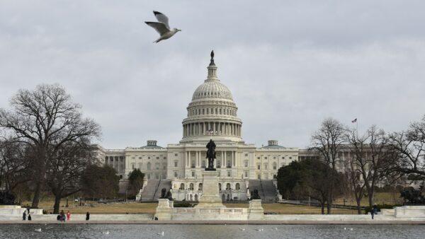 美当选议员遗孀补选胜出 接替丈夫众院职位