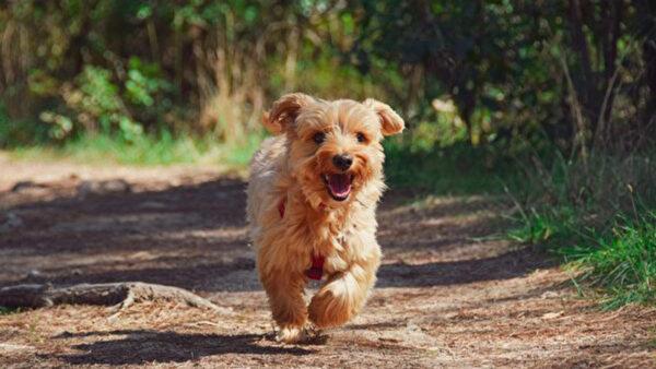 意大利忠狗每天独自走3公里 到坟前陪主人