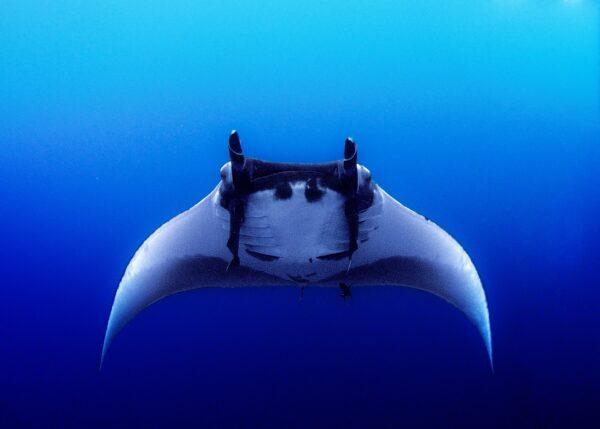 意外拍到「大海怪」躍出水面 美攝影師直呼驚奇