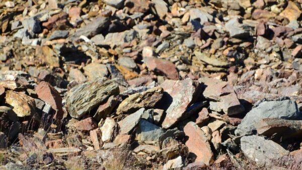 澳洲铁矿石价格飙至历史高位 北京痛苦煎熬