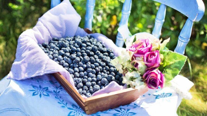 顽固腹部脂肪有损健康 蓝莓可助有效解决