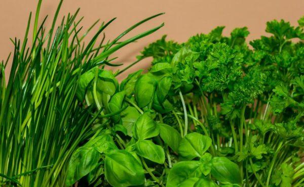 春天養生7大忌 推薦最該吃的5種菜