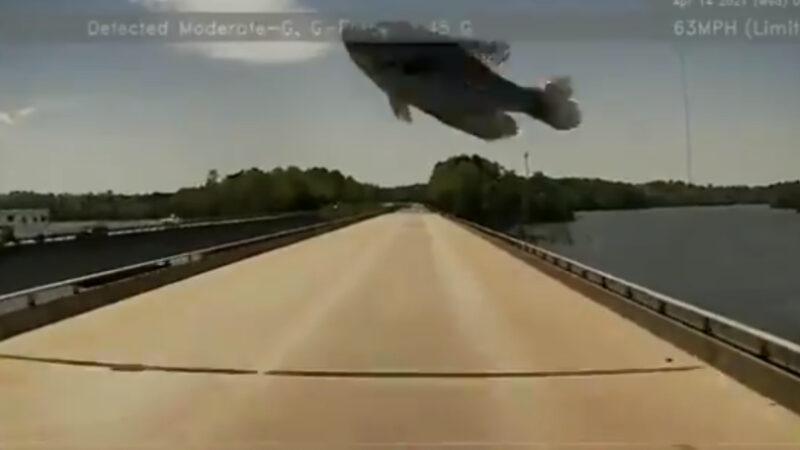 海鸥送外卖? 天降大鱼砸挡风玻璃 吓坏司机