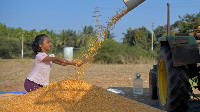 全球糧食供應緊張 美第4季玉米已被中國購買