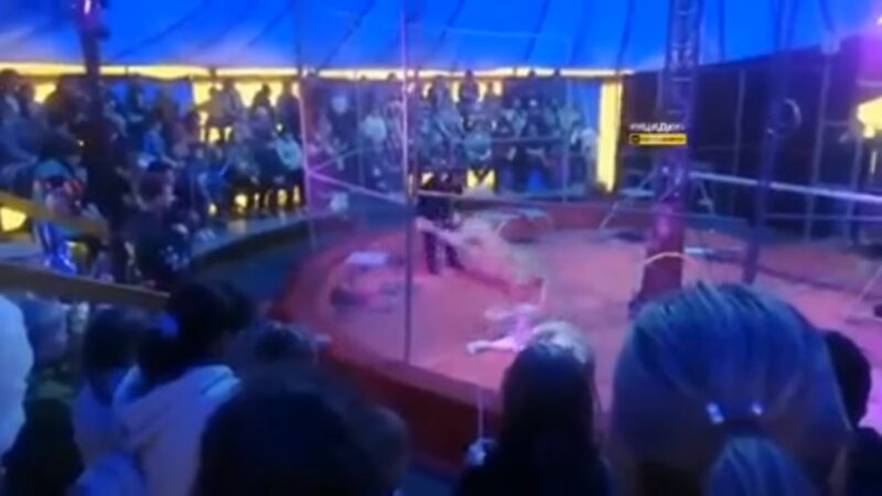馬戲團母獅獸性大發猛咬馴獸師 驚悚畫面曝光(視頻)