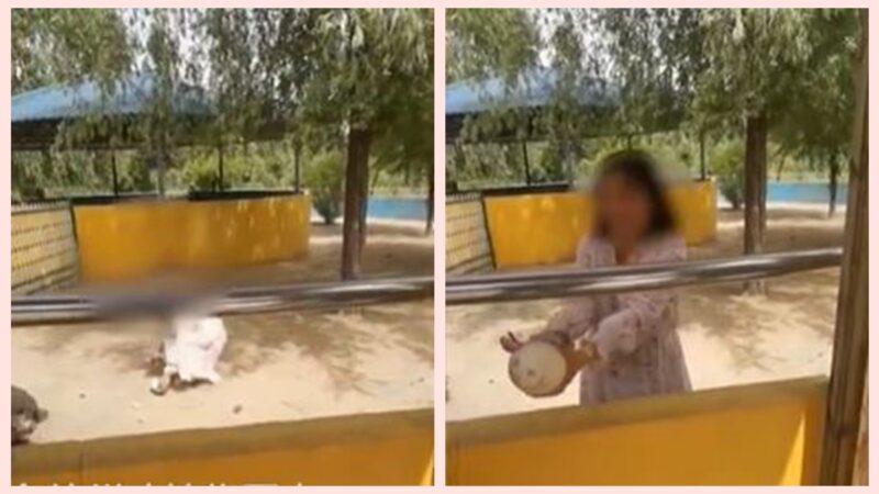 山東女遊動物園 翻牆偷鴕鳥蛋引熱議