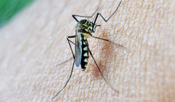 輕鬆驅蚊免蚊香