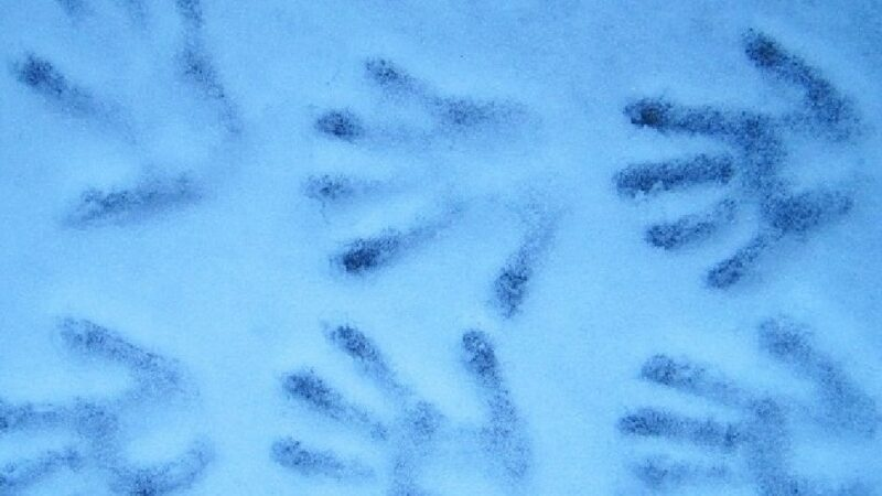 墨西哥137个神秘手印 源自玛雅儿童之手