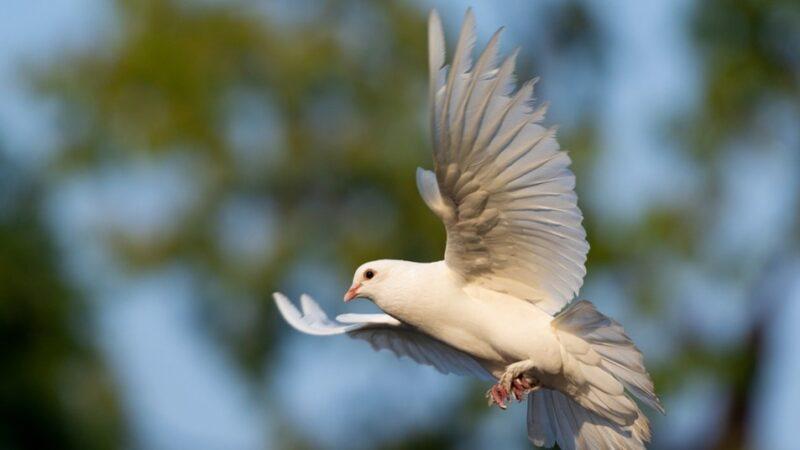 浮生行吟:讀書筆記6《割肉貿鴿》故事