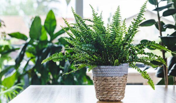 這些植物養在浴室活得更好 還能去濕除臭