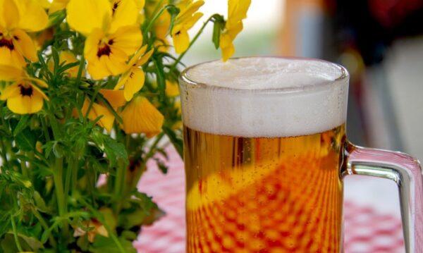 长期喝啤酒对身体有危害吗?不可不知