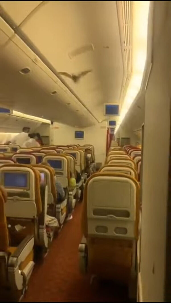 机上有蝙蝠乱飞 印航紧急返航 直击视频曝光