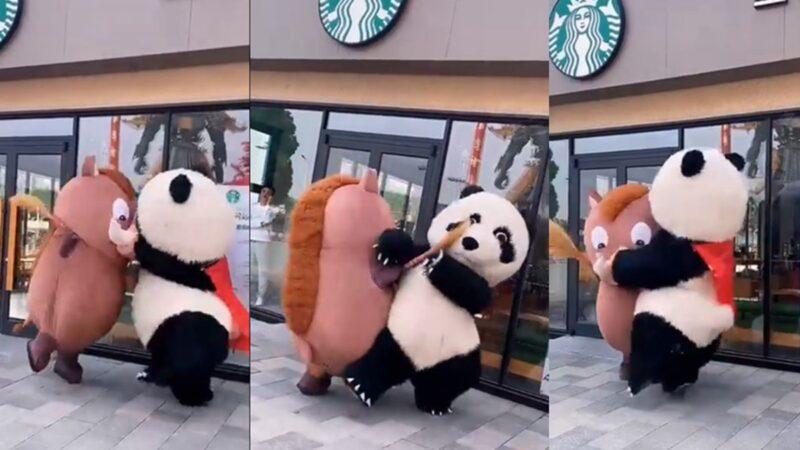 """""""熊猫""""和""""野猪""""打架 引发网路笑翻(视频)"""