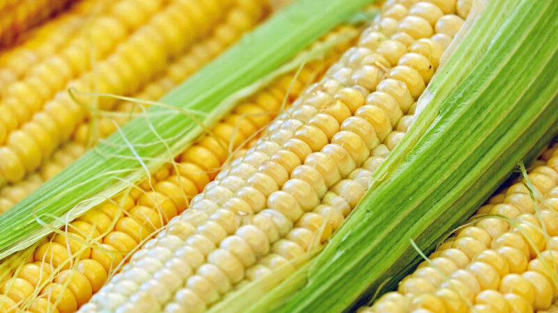 中共打擊大宗貿易 美玉米金屬價格劇烈波動