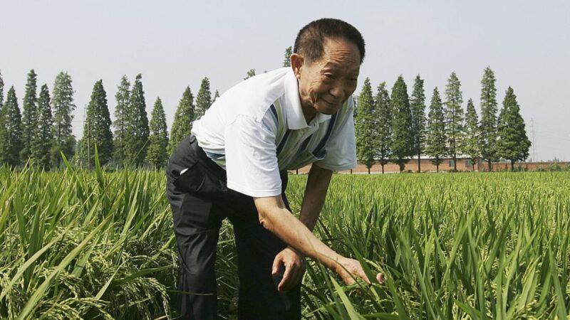 袁隆平为何研究杂交水稻?党媒造假被抓包