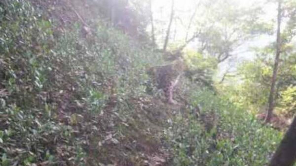 杭州隱瞞金錢豹出逃半個月 疑還有一成年豹未抓到