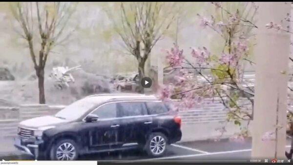 """北京河北晚春飘雪 专家洗地称""""很正常""""(视频)"""