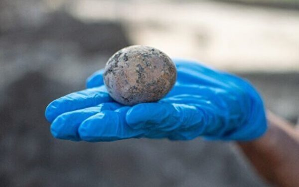 以色列发现保存完整千年鸡蛋 震惊考古学家