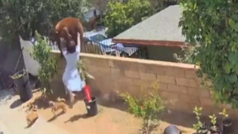 为救爱犬勇气大爆发 17岁少女徒手推熊下围墙