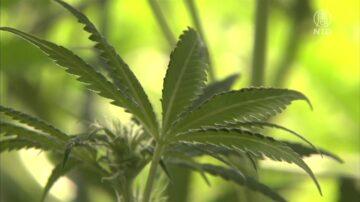 南加警方查获价值百万元大麻 逮捕23人