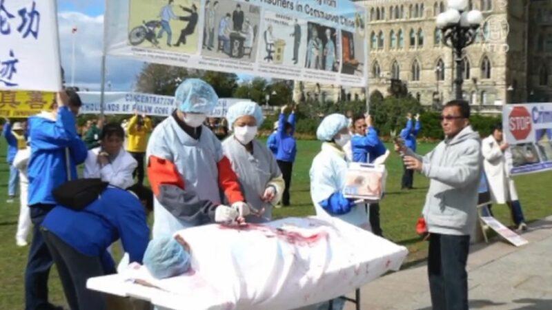 非政府組織促加拿大立法 制止器官移植犯罪