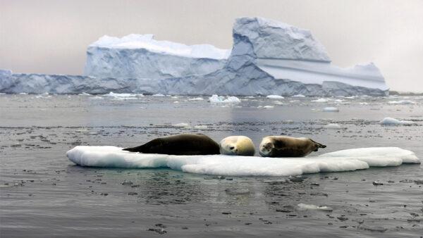 """地球有五大洋?美国国家地理学会正式命名""""南大洋"""""""