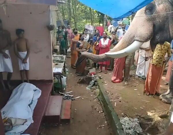 有靈性! 象夫病逝 大象徒步2小時上門弔唁