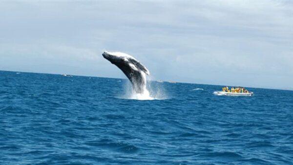 美国渔夫被鲸鱼吞入口中 不足1分钟吐出捡回一命