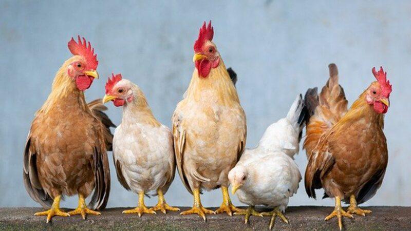 全球首例!江蘇男子感染H10N3禽流感