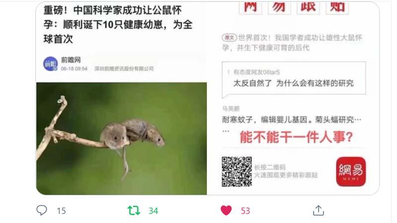 """中共科学家让公鼠怀孕产子 网批""""不干人事"""""""