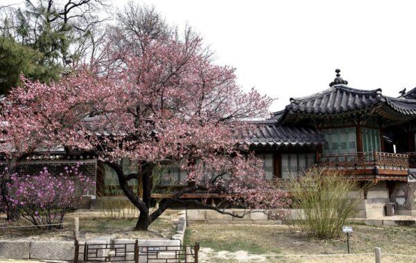 中国古代文化漫谈——从《梅花诗》说起