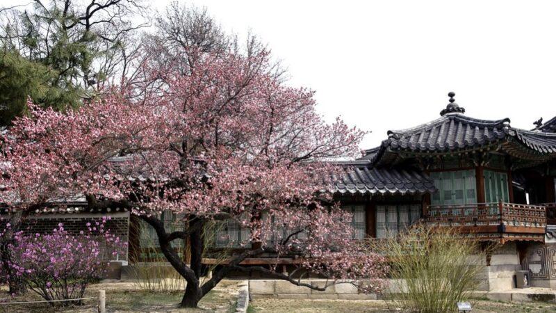 中國古代文化漫談——從《梅花詩》說起
