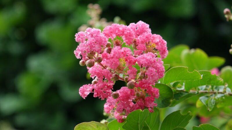 植物的惊人现象:数学能力和发出响声