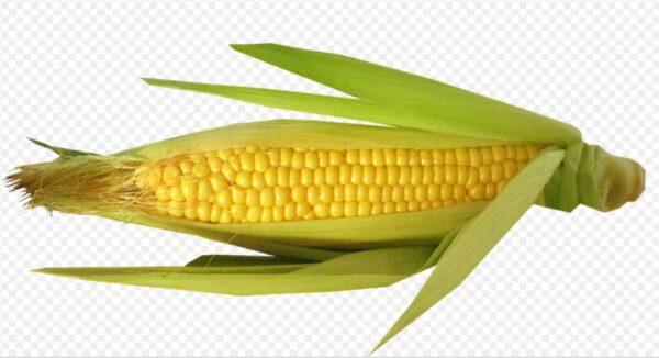 """教你正确方法保存玉米""""放一年都新鲜"""""""