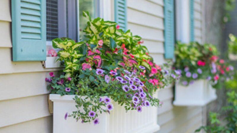 如何打造你的窗外盆栽风景