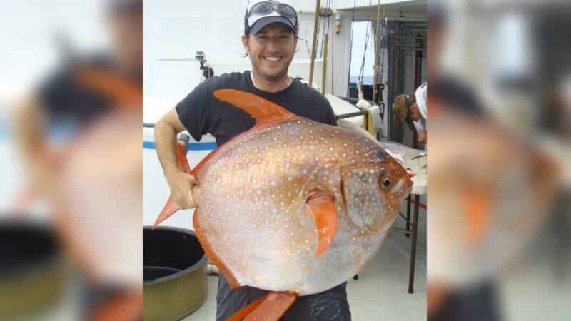 色澤艷麗重達100磅 罕見月魚擱淺美國海灘