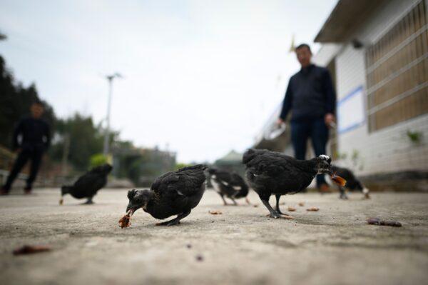 四川巴中市现人感染禽流感H5N6病例