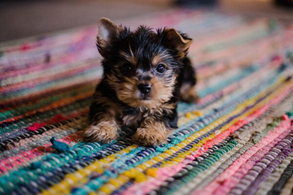 幼犬陷沥青坑垂危 狗妈妈向人类求救 感动万人
