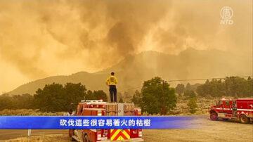 強風吹襲植被乾燥 卡爾多山火迅速擴散