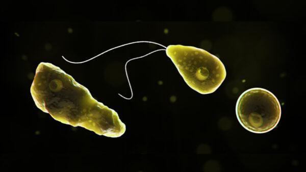 湖中游泳感染食腦變形蟲 美7歲男童身亡
