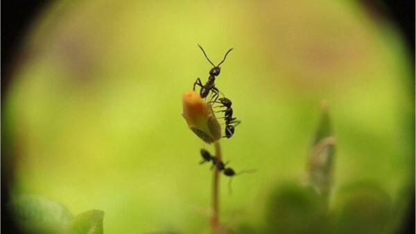 螞蟻的「眼界」