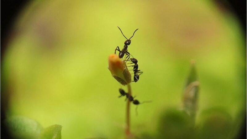 """蚂蚁的""""眼界"""""""