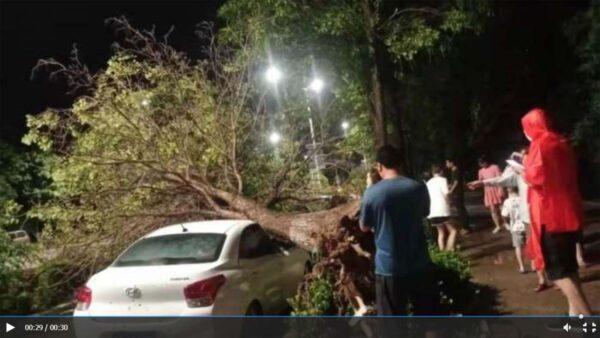 河南北部再遭暴风雨袭击 拔树倒屋 大面积停电